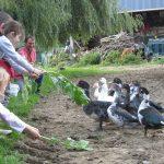 les canards rentrent de la rivière
