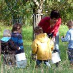 ramassage de pommes